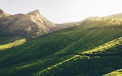 DSC_0654-edit (nesteaman2) Tags: india kerala munnar meesapulima kolukkumalai tea plantation estate nature green hills light