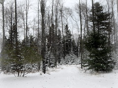 Path in a snowy woods--Explored (yooperann) Tags: marquette upper peninsula michigan snow trees path winter