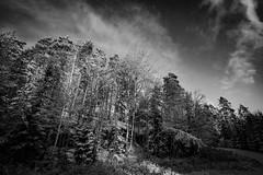 20171119004001 (koppomcolors) Tags: koppomcolors koppom värmland varmland sweden sverige scandinavia winter snow snö forest skog