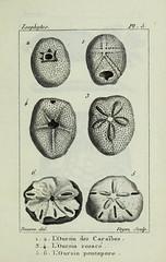 n30_w1150 (BioDivLibrary) Tags: annelida atlases cnidaria echinodermata eels helminths worms universitylibraryuniversityofillinoisurbanachampaign bhl:page=54348119 dc:identifier=httpsbiodiversitylibraryorgpage54348119 echinoderms