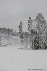 20171129001074 (koppomcolors) Tags: koppomcolors snö snow winter vinter värmland varmland sweden sverige scandinavia