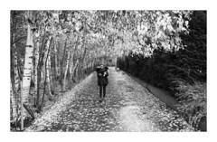 A canopy and carpet (Dave Fieldhouse Photography) Tags: london streetphotography street photography blackandwhite monochrome walker person alleyway autumn trees leaves southbank riverthames southwark fuji fujifilm fujixpro2 wwwdavefieldhousephotographycom contrast urban foliage