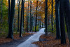 Haagse Bos / Herfst 2017 (zilverbat.) Tags: denhaag autumn herfst zilverbat nature availablelight pad route map tour bos haags natuurlijklicht bladeren herfstkleuren landscape landschap thehague netherlands nederland nl holland dutch ngc staatsbosbeheer colors artofnature world bookcover bridge