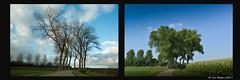 Reuzen - Colosses - Giants (Jan Bogers) Tags: janbogers bomen roosendaal bulkenaar reuzen giant géant zomer colosse boom