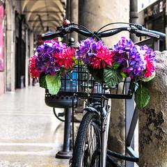Bologna (that Geoff...) Tags: bologna italy italian cityofbologna emiliaromagna canon powershot g7x italia citta cycle cycling bike flowers bicycle bicicletta fiori strada portico pretty bella