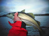 Revive the Clyde (Nicolas Valentin) Tags: pollock clyde scotland fishing lrf kayakfishing
