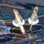 Ice Decoration - Décoration de glace thumbnail