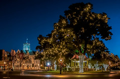 Happy Holidays (Jims_photos) Tags: christmaslights texas trees outdoor outside adobelightroom adobephotoshop shadows downtown jimallen jimsphotos jimsphotoswimberleytexas lightroom nopeople nikond750 nightphotos nightshot newbraunfelstexas