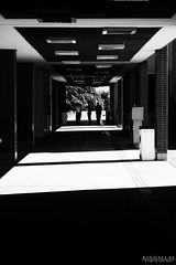 Shadows and sun (Kindallas) Tags: shadows usp leste são paulo brazil brasil light black white