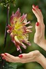 Hand Framing (swong95765) Tags: flower beauty conecting projecting plant life living nature pretty bokeh hands nailpolish