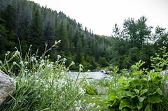 Anglų lietuvių žodynas. Žodis woodland oxeye reiškia miško oxeye lietuviškai.