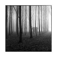 fog • seine, normandy • 2016 (lem's) Tags: fog house trees brouillard shadow ombre maison arbres normandy normandie rolleiflex t