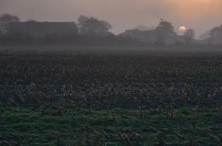 Die Sonne geht auf über einem Bauernhof; Bergenhusen, Stapelholm (8)