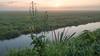 Down by the water (Jorden Esser) Tags: middendelfland flower grass sundawn sunrise cobweb nederlandvandaag landscape canal monday