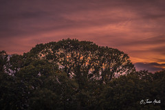 Rojos atardeceres.... (Javier Arcilla) Tags: atardeceres cielo rojizo rojo arboles aire libre naturaleza pentax pentaxk70 k70 pentaxdal pentax1855mm 1855mm moñon vegavalcarcel elbierzo leon castillayleon españa paisajes motaña