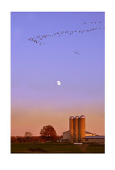 Autumn Moon (static_dynamic) Tags: pennsylvania farm moon moonrise birds canadageese fall evening sunset autumn fallinpa dusk nature farmland