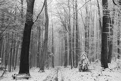 Soon... (desomnis) Tags: winter snow forest woodland woods wienerwald viennawoods monochrome blackandwhite bw desomnis canon6d tamronsp2470mmf28 tamron2470mmf28 tamron2470mm canon canoneos6d
