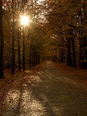 Herfst - Utrechtse heuvelrug (mariandeneijs) Tags: bos bomen boom tree trees forest herfst herbst autumn