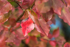 100X 2017 - 80-100 Photos with Primes Lenses Only (norasphotos4u) Tags: 100x2017 trees leaves fall canon7dmkii social ©noraleonard canonef100mmf28lisusmmacro 100xthe2017edition image80100