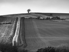One Tree Hill (Céanndhubahn) Tags: citrit track swscotland beechhedge fields bwcountryside bw parallellines scottishcountryside farmland countryside drystanedyke onetreehill wetroad vertical scotland hill lonetree