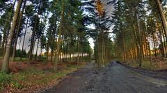 Chemins vers Mont-le-soie a partir du rond-chêne (RenaudWarnotte) Tags: foret villedubois rondchêne hdr tonemapped