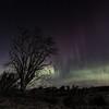 Aurora 7th Nov (amcgdesigns) Tags: andrewmcgavin rafford scotland unitedkingdom gb aurora northernlights tree sky drama dramatic night nighttime stars skyatnight landscape scottish scottishweather scottishlandscape forres moray morayshire canon1022mm eos7dmk2 beams lights