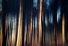 Forest Wanderings (Janet_Broughton) Tags: forest trees dreamy blur blurry icm iphone slowshutter