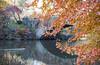 Central Park, NYC (D. Bradford) Tags: newyorkcity centralpark fall landscape