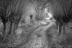 The long and ... (*MH*) Tags: thelonganwindingroad weg way geschwungen gewunden winding bw sw monochrom weiden mecklenburgvorpommern herbst autumn einsam lonely lostplace melancholie melancholisch