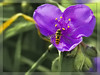 A heart for bees (Heinze Detlef) Tags: schwebfliege blüte nektar pollen rahmen insekt tier blattgrün makro macro schwirrfliegen