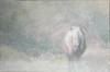 Misty morning (picturecave) Tags: shetland pony horse photo art digital portrait