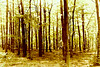 FOREST_PTX7510 (keresztydoki) Tags: color fantasy forest hungary light oktober landscape nature outdor
