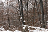 (Pentastar In The Style Of Demons) Tags: canon 5dmk2 ef24105f4 forest mountain snow cold autumn nature landscape