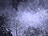 Avalanche (Natalia Medd) Tags: smow snowstorm avalanche blizzard blue trees forest wind windy sky bw monochrome winter night evening snowfal ipnone