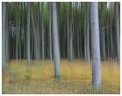 blurred forest view (kurtwolf303) Tags: 2017 bäume deutschland wald blurred verschwommen trees forest germany gespensterwald nienhagen langzeitbelichtung longtimeexposure mft kurtwolf303 olympusem1 omd microfourthirds micro43 systemcamera mirrorlesscamera natur nature grass 500v20f
