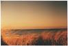 (Kelly Marciano) Tags: film analog 35mm velvia100f canona1 slidefilm xpro crossprocessed queerhorizons sky sea ocean beach grass seagrass filmgrain vignette light magiclight dreamy duxburyma