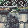 [The World iN my eyes] #250 Breach。再怎麼補,似乎都會有一個缺口 #365days #theworldinmyeyes #wall #hole (iamiN) Tags: 250 365days theworldinmyeyes wall hole