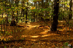 Autumn Forest walk (midnightstudio85) Tags: autumn adventures afternoon forest hike hikingadventures hikingday intothewoods canon canonphotography canont6s ma