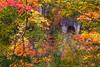 DSC_3113 (Timmy Tsai) Tags: autumnleaves brook canyon colors japan miyagiken narukyogorge otaniriver tourism trail train autumn mountain photography season tree 大谷川 季節 宮城縣 山 峽谷 攝影 旅遊 日本 樹 步道 溪水 火車 秋天 紅葉 顏色 鳴子峽