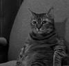 Sweet Lucy (Light Echoes) Tags: sony a6000 2017 winter february cat chat kot gatto feline pet katze kat kalo котка gato gate gat animal 고양이 γάτα kočka 貓 القط kass kissa חתול बिल्ली miv macska kucing 猫 vighro kaķis katė qattus katten گربه pisica кошка mačka katt แมว kedi кішка بلی mèo cath rescue shorthairdomestic tabby lucindamtoffeenose lucy
