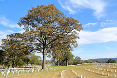 Chattanooga National Cemetery (dpsager) Tags: chattanooga chattanooganationalcemetery civilwar dpsagerphotography nationalcemetery tennessee tree