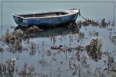 Poésie de la nature (pileath) Tags: paysage landscape barque bleue blue rowing boat canard duck fleurs flowers water eau mer see poésie nature