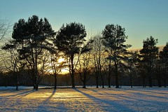 Natures beauty (Eddie Crutchley) Tags: europe england cheshire outdoor nature beauty trees simplysuperb sunlight snow shadows sunset blueskies silhouette greatphotographers