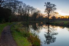Sunset along the Wey in December-EC140404 (tony.rummery) Tags: burpham em10 eveningsun guildford mft microfourthirds omd olympus reflections riverwey sunset towpath trees wey winter england unitedkingdom gb