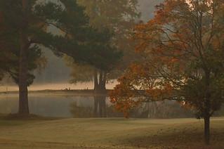 Dawn on the pond