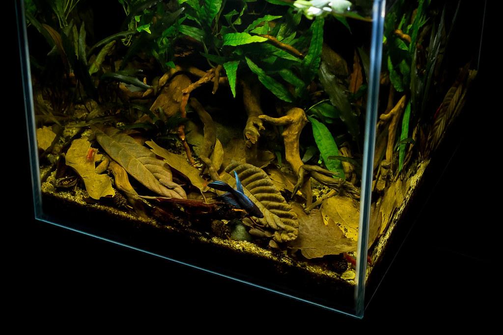 The World's Best Photos of aquarium and boraras - Flickr