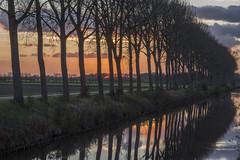 West-Zeeuws-Vlaanderen - The Netherlands (wietsej) Tags: westzeeuwsvlaanderen the netherlands rx10 rx10m4 iv sony sunset trees landscape reflection rx10iv