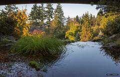 Under The Bridge At The Q.E. (Clayton Perry Photoworks) Tags: vancouver bc canada fall autumn explorebc explorecanada trees leaves queenelizabethpark