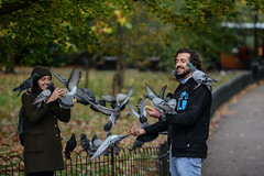 Flapping / not in a flap (PChamaeleoMH) Tags: birds centrallondon columbidae fauna london people pigeons stjamesspark