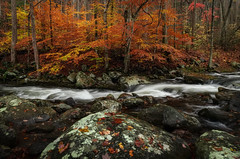 A River Runs Through It. (ALP Images) Tags: gsmnp greatsmokeymountainnationalpark tremont stream cascade fujixt1 fall foliage autumn
